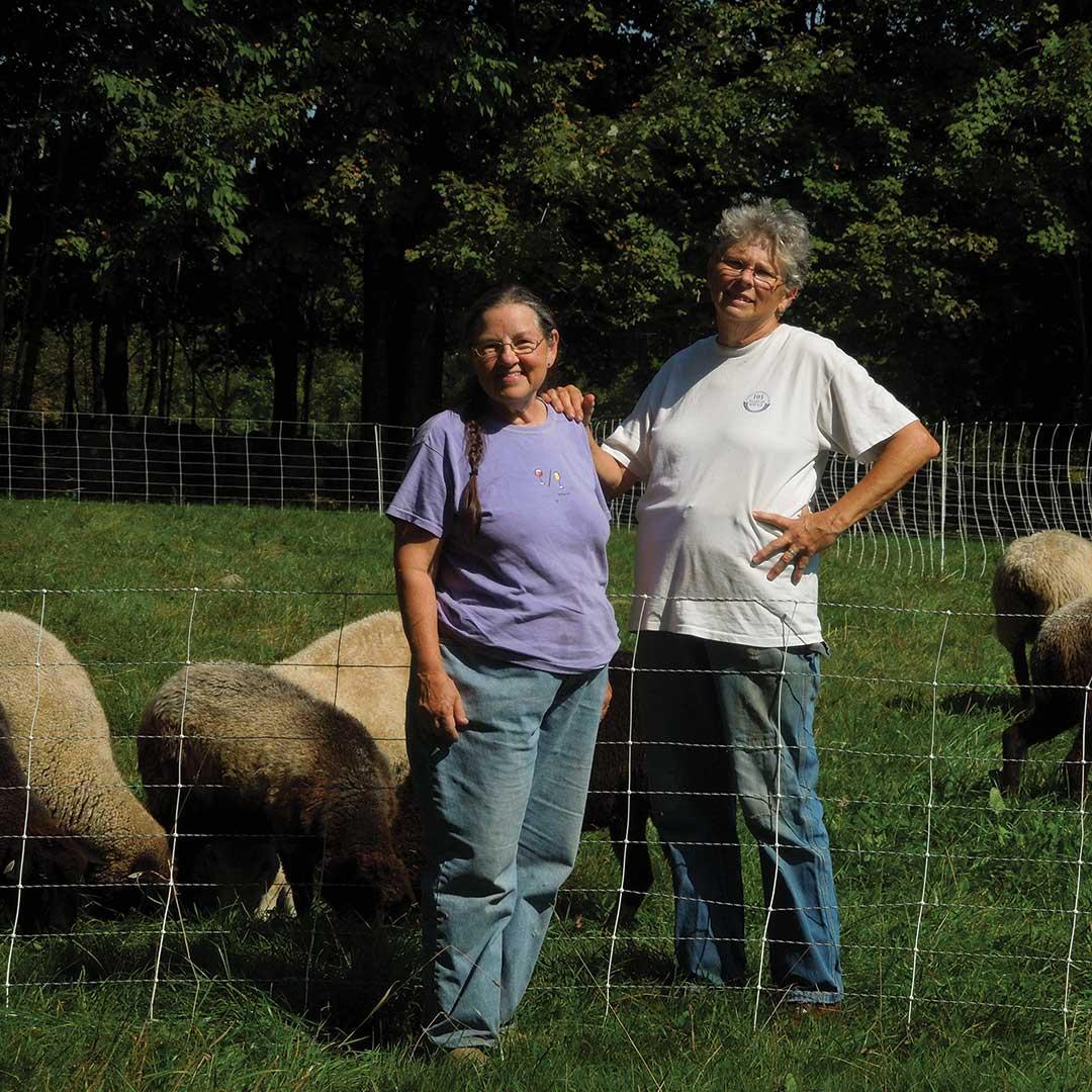 sheep's wool