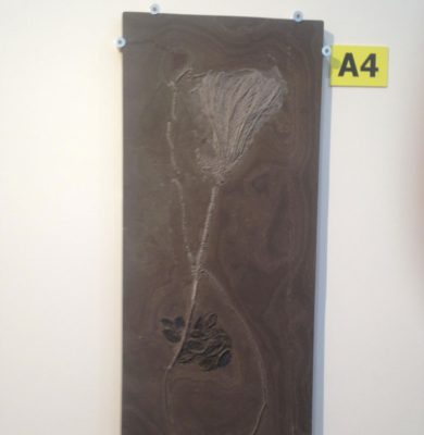 giant plant fossil at 22nd Street Tucson shows