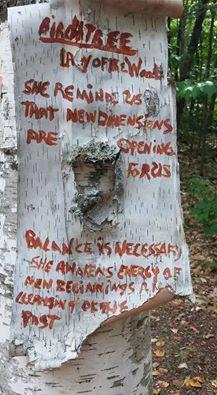 Birch tree wisdom
