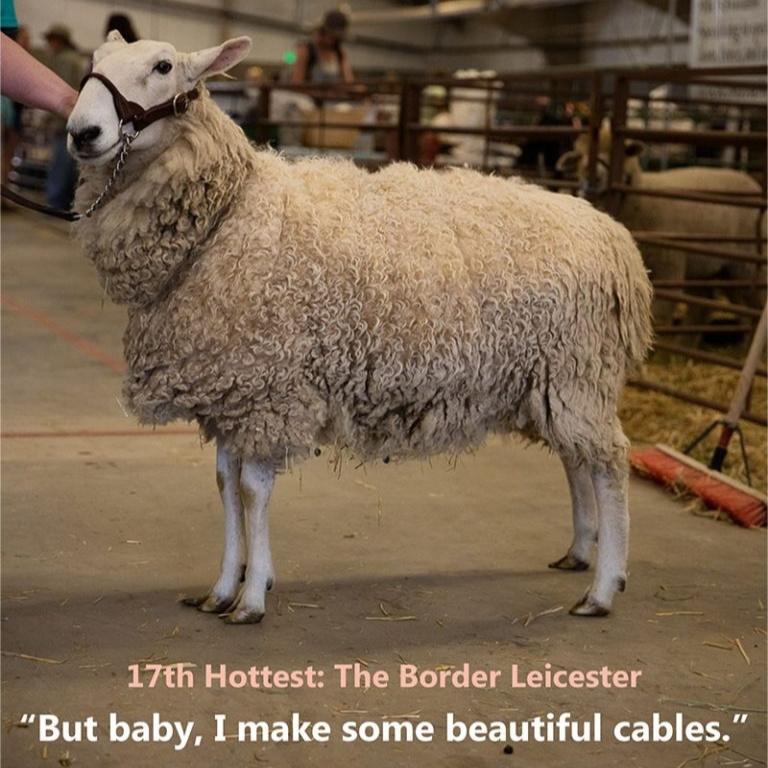 c380b20cca80b Lisa's List: Fiber Animals Ranked by Hotness | Interweave