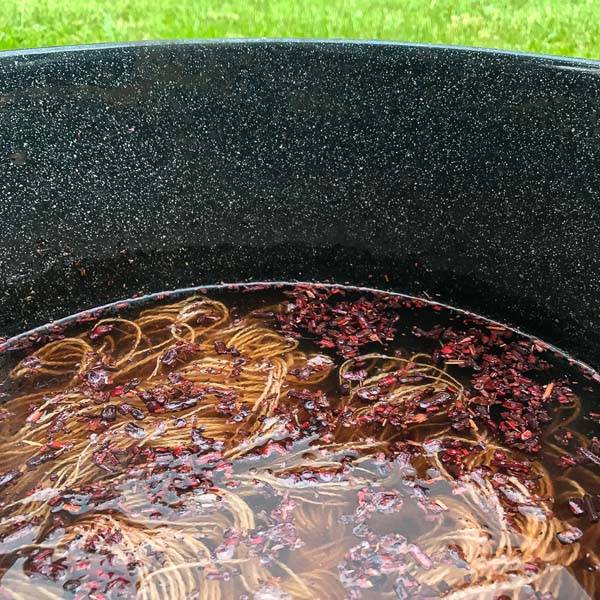 Madder roots from Eugene Textile Center steeping in the sun.