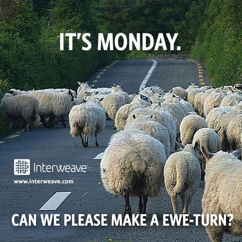 Weaving Funday ewe turn
