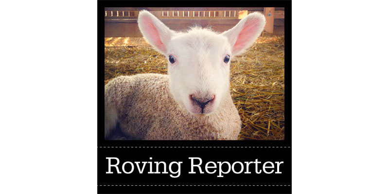 Roving Reporter: The Handspinning Challenge