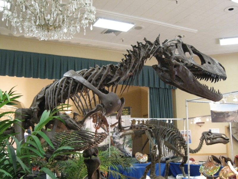 dinosaur skeleton at the Tucson gem shows