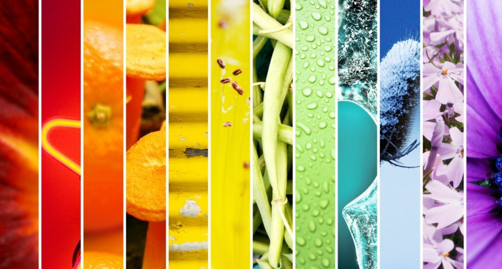 Color Wheel Clarity: Understanding the Basics of Color