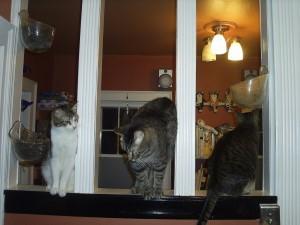 debs cats c
