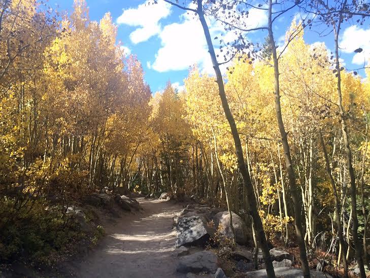 fall-aspens