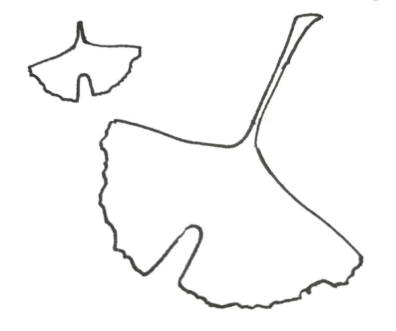 ginkgo leaf pattern