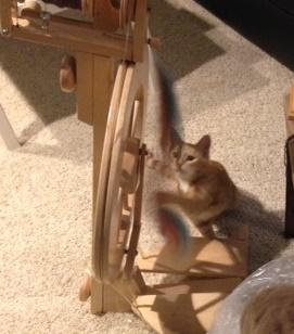 cat-spinning-wheel