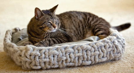 Cat Knitting Patterns: 40 Winks Basket from Interweave Knits Weekend 2009 that you have to knit for your furry friend.