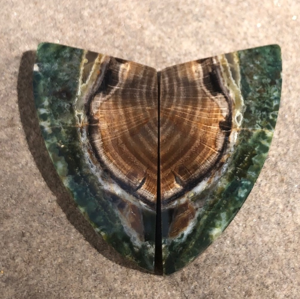 How old was this tree? These petrified wood cabochons clearly show tree rings; photo: Lexi Erickson