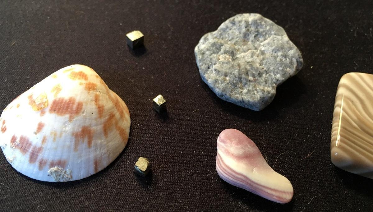 seashells sand