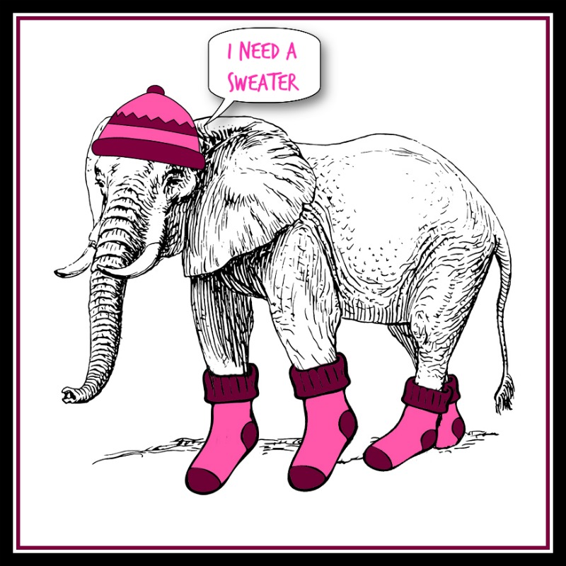 Rescued elephants: elephant with pink hat and socks